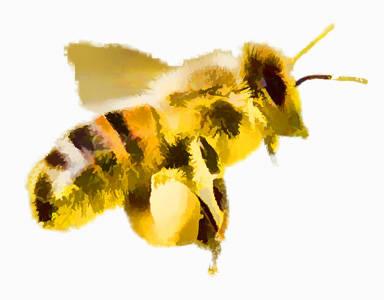traitement-essaim-abeille-entreprise-COSTE