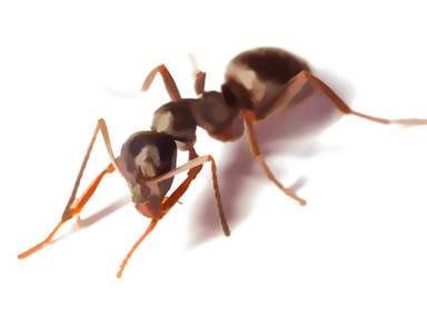 traitement-nid-fourmis-fourmiliere-entreprise-COSTE