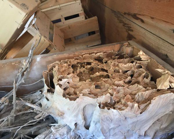 destruction elimination stop nids guepes frelons fourmis tour d aigues 84240 destruction nids. Black Bedroom Furniture Sets. Home Design Ideas