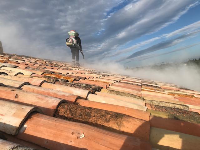 destruction nid de gu pes charleval 13350 bouches du rhone. Black Bedroom Furniture Sets. Home Design Ideas